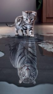 Letting go of the past: kitten sees tiger as reflection